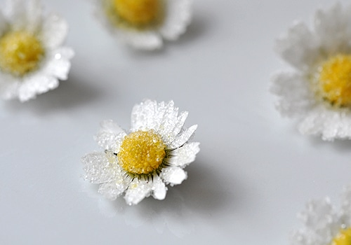 Kandierte Gänseblümchen