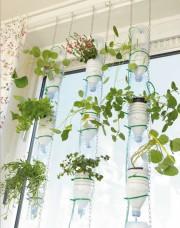 Aus Plastikflaschen wird ein Indoor-Garten