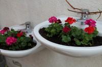 Waschbecken als Pflanzgefäße