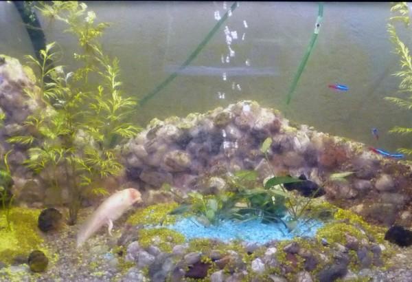 aquarienlandschaften selbst gemacht handmade kultur. Black Bedroom Furniture Sets. Home Design Ideas