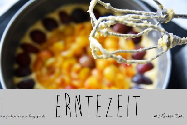 Erntezeit: Mirabellen-Küche