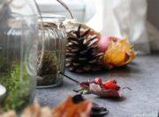 Herbst auf der Fensterbank