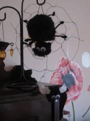 Spinne und Fliege