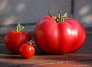 Tomaten Erntefest