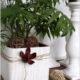 Upcycling - DIY : Von der Bambusmatte zum Übertopf für Blumen