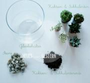 DIY Pflanzenterrarium