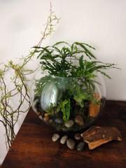 Grünes Design für die Wohnung: Farn im Goldfischglas