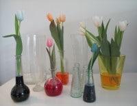 Blaue Tulpen, grüne Tulpen? Gibt´s doch nicht... Doch :-)!