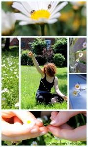 Einfach schön: Gänseblümchen