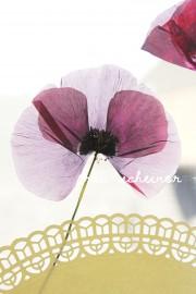 Fang den Sommer ein! DIY mit Blumen