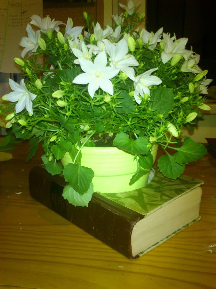 Blühendes Buch