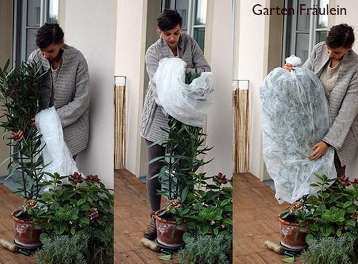 Balkon und Kübelpflanzen winterfest machen