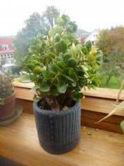 Blumentopfüberzug aus altem Pullover nähen