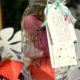 Erdbeere trifft Ball Jar