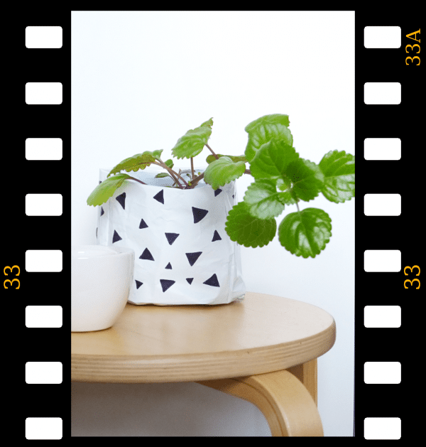 Upcycling: Pflanztüte