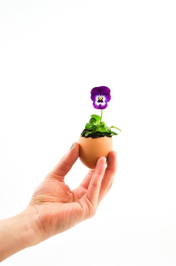Ostern DIY - das Blumenei