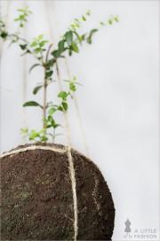 Kokedama pflegeleicht… DIY string garden