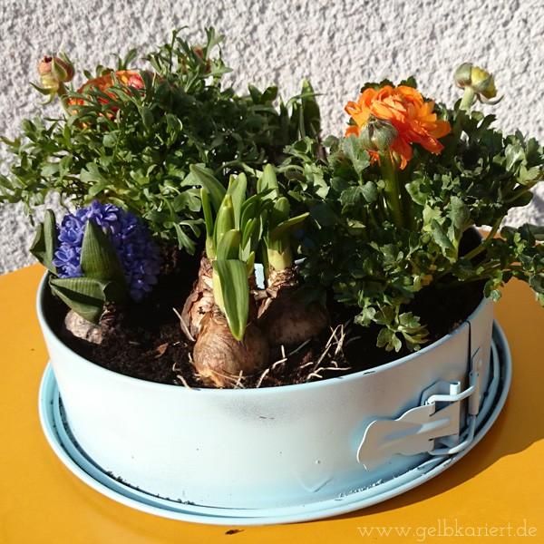 Upcycling - Frühlingsblumen in einer alten Springform
