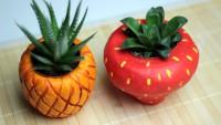 DIY: Fruchtige Blumentöpfe für Sukkulenten