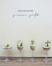 Urban Jungle Bloggers #4 | Green Gift