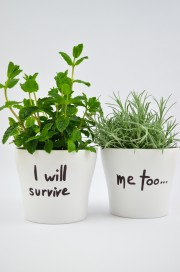 """Der """"I will survive""""-Übertopf"""