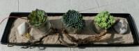 Schnelle Dekoration für Terrasse oder Balkon
