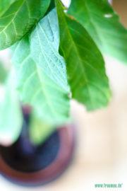 Avocados züchten – Oder Geduld ist eine Tugend