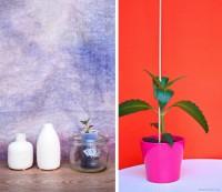 Urban Jungle Bloggers #6   plantcolorpop