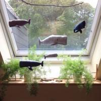 Wale am Küchenfenster