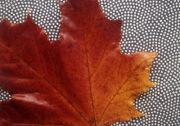 """Die schönen Herbstfarben """"konservieren"""""""