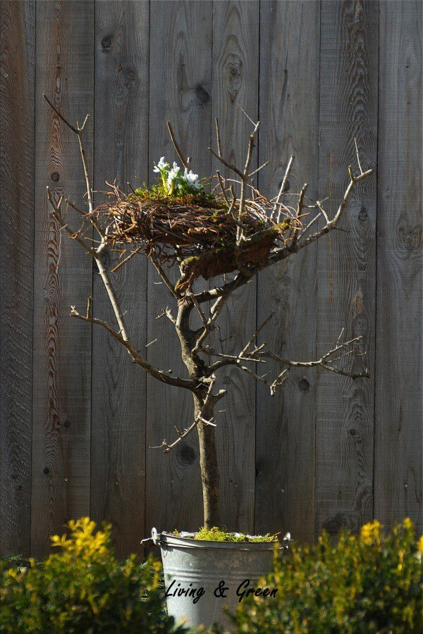 Ein Nest aus Birkenreisig