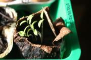 Avocadoschalen und Eierschalen als ideale Pflanztöpfchen
