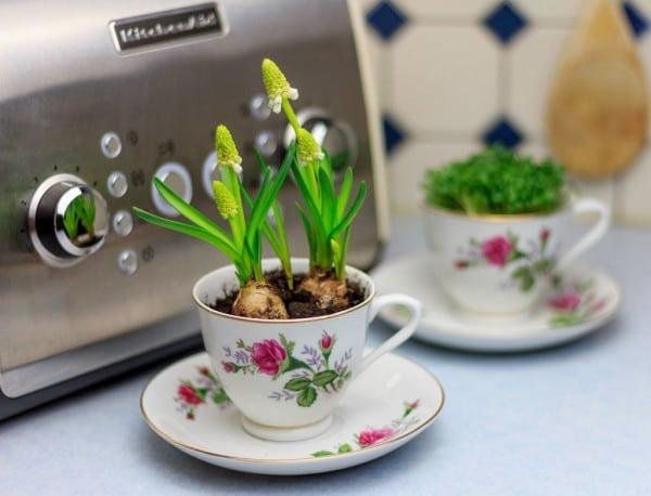 Upcycling von Tassen zu Blumentöpfen