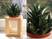 DIY Pflanzenständer aus Fotorahmen