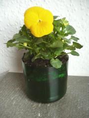 Ein Blumentopf aus Altglas - Upcycling