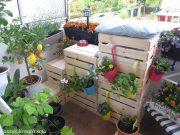 Katzentreppe mit vertikalen Garten