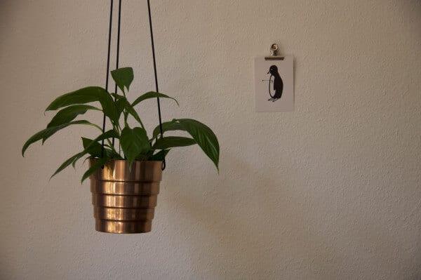 Kupferner Pflanzenhänger
