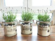 Lavendel in ein Windlicht pflanzen