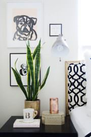 "#LOVE – THE ""MUST HAVE PLANTS"" OF HOME DECOR"