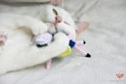 DIY Amigurumi Katzenspielzeug | Adventuretime für die Katz'