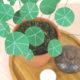 DIY Pflanze aus Papier - Chinesischer Geldbaum