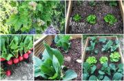 Gemüse anbauen: so klappt es mit der Ernte auch für Gartenneulinge