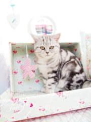 Katzenvilla aus einem Schuhkarton