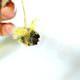 Bienen aus Erlensamen