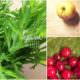 grüner Smoothie mit Blattgrün aus dem Garten