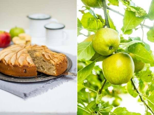ein uralter Apfelkuchen – Apple Cake Recipe