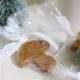 ganz schnell gemachte weihnachtliche Bonbons