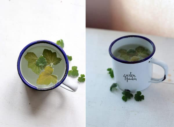 Tee aus Duftgeranie