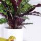 Ungiftige Pflanzen für Katzen | Mehr Urban Jungle für die Katz' | Mohntage