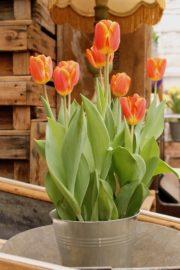 10 tolle Ideen für Tulpen